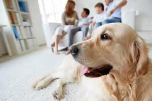 Alquiler una casa vacacional donde su mascota es bienvenida también